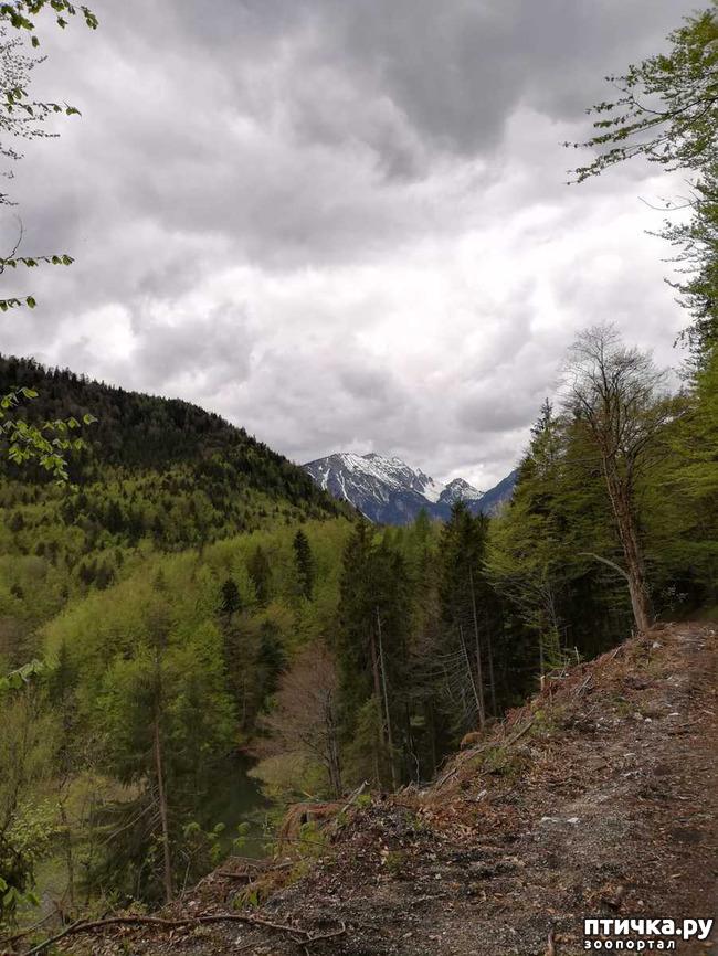 фото 8: Прогулка по Альпзее и окрестностям Нойшванштайн.