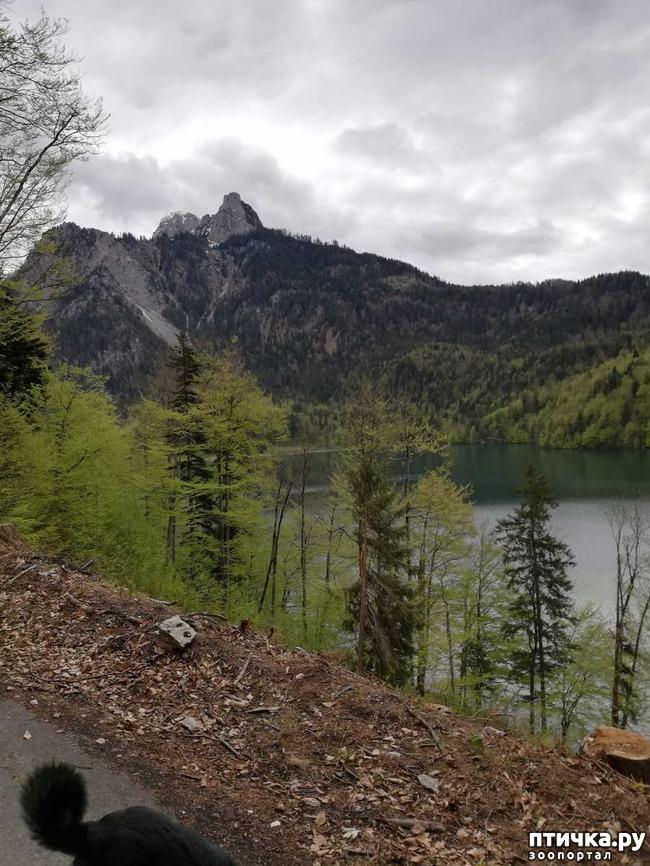 фото 10: Прогулка по Альпзее и окрестностям Нойшванштайн.