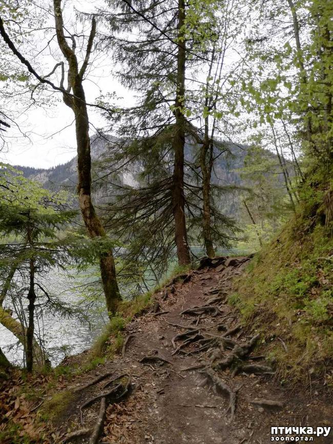 фото 11: Прогулка по Альпзее и окрестностям Нойшванштайн.