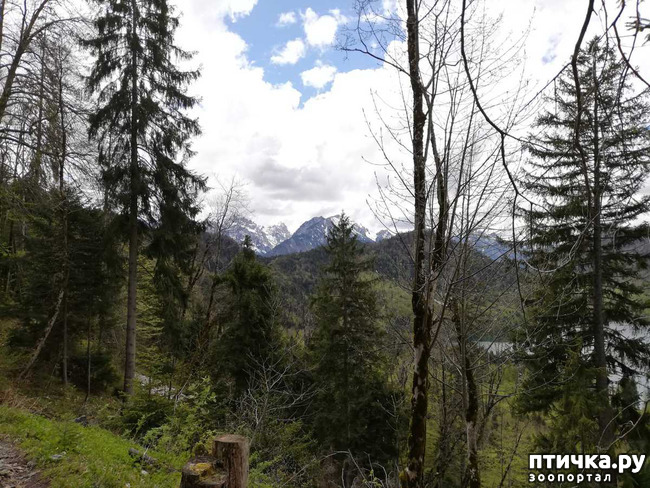 фото 13: Прогулка по Альпзее и окрестностям Нойшванштайн.