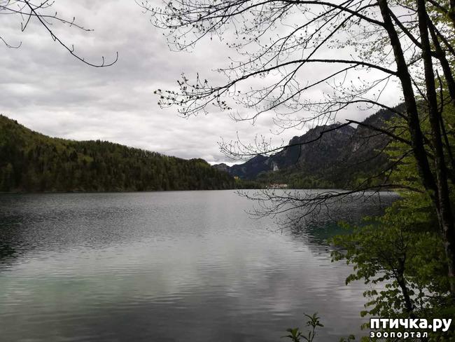 фото 16: Прогулка по Альпзее и окрестностям Нойшванштайн.