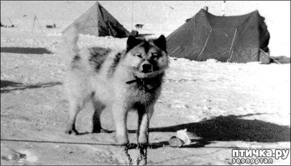 фото 1: Собаки, которых мы никогда не увидим