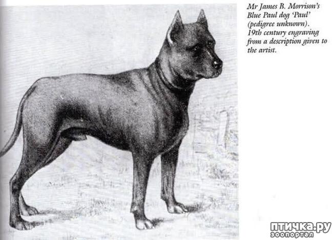 фото 2: Собаки, которых мы никогда не увидим