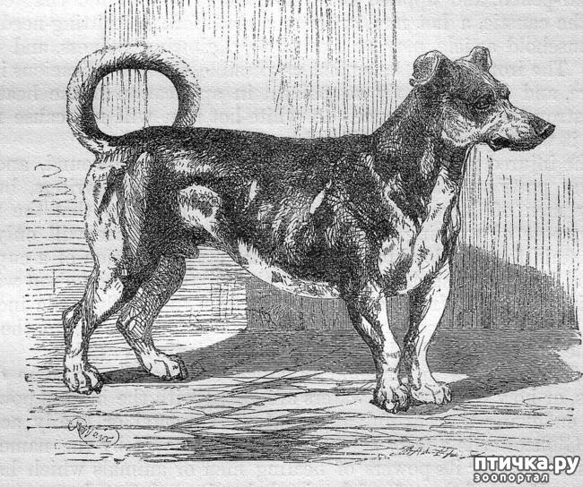 фото 3: Собаки, которых мы никогда не увидим