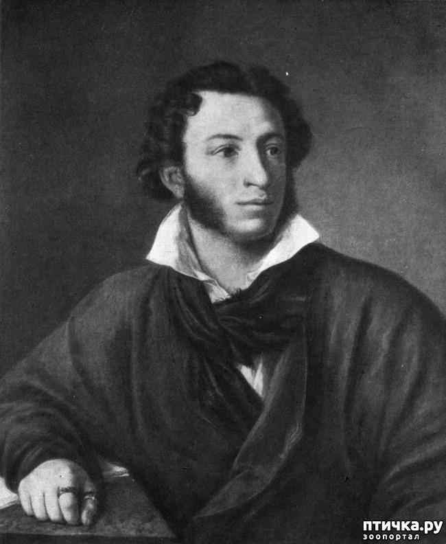 фото 1: Пушкин