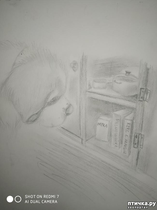 фото 3: Карандашные иллюстрации