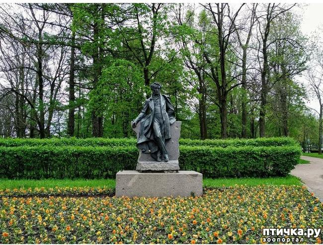 фото 2: Пушкин