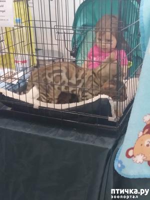 фото: Ещё одна кошачья выставка
