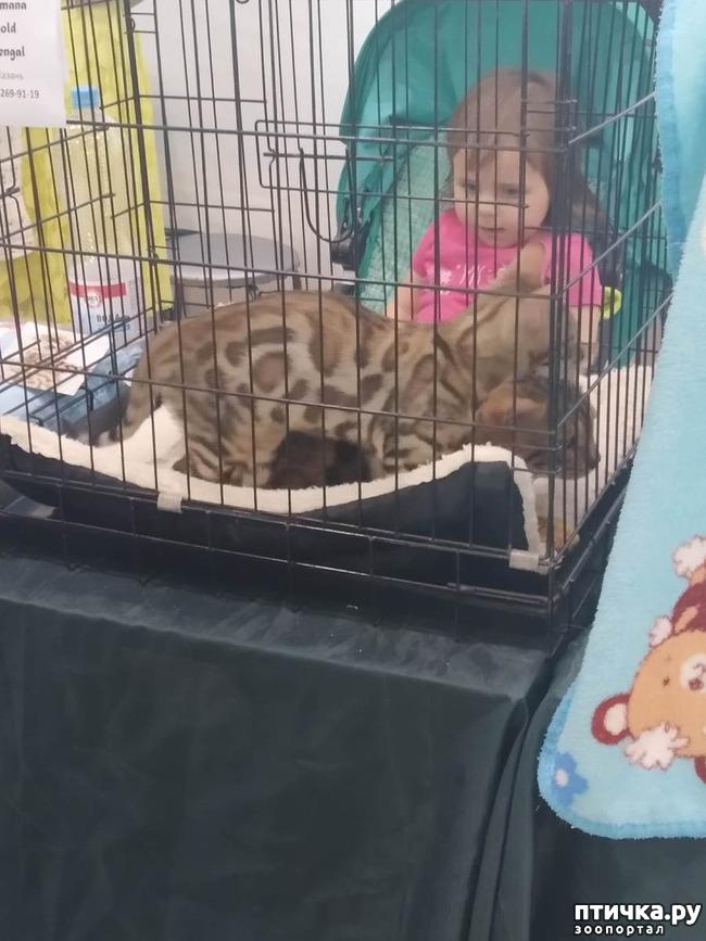 фото 1: Ещё одна кошачья выставка