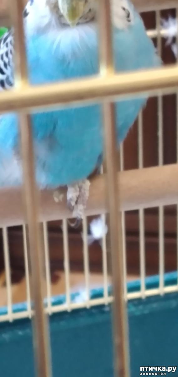 фото 1: Что с попугаем?