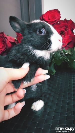 фото: Декоративные Крольчата от Заводчика