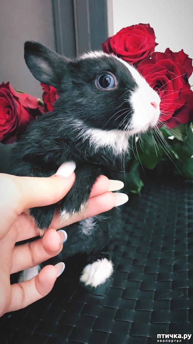 фото 1: Декоративные Крольчата от Заводчика