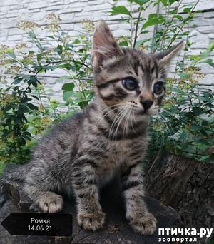 фото: Котятам 2 месяца