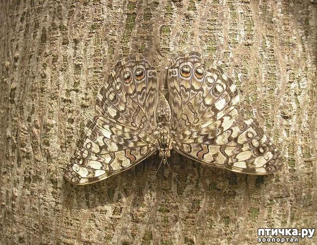 фото 3: Полёт бабочки