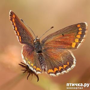 фото: Полёт бабочки