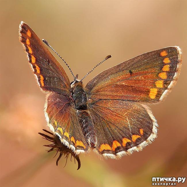 фото 1: Полёт бабочки