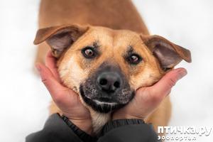 фото: Фрея - нежная собака ищет дом