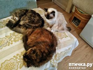 фото: Кошкино королевство