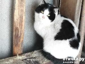 фото: Как приручить диких кошек?