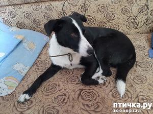 фото: Собака стала гадить дома