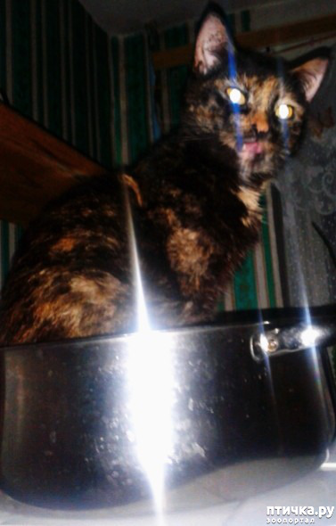 фото 1: Моя адская кошка
