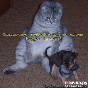 фото: Смешные собаки 1.