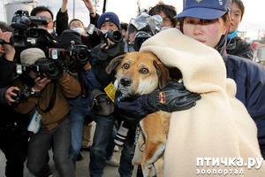 фото: Дейзи - первая гражданская собака, завоевавшая Медаль Почета в Нью-Йорке.