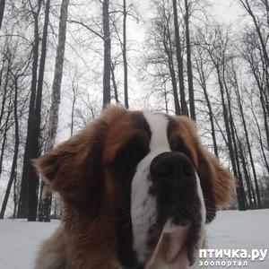 фото: Почему не стоит отдавать собаку на перевоспитание кинологам?