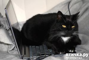 фото: Служебные кошки