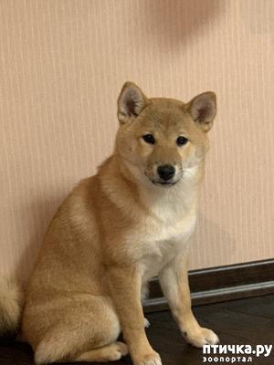 фото: Собака ходит в туалет на диван