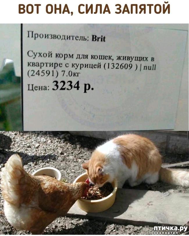 фото 22: Праздничный салат
