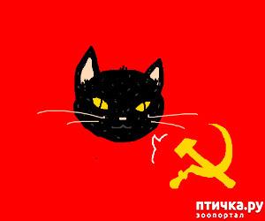 фото 1: Жизнь кошек во времена Советского Союза. Давайте вспоминать.