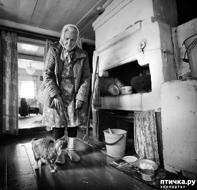 фото 3: Жизнь кошек во времена Советского Союза. Давайте вспоминать.