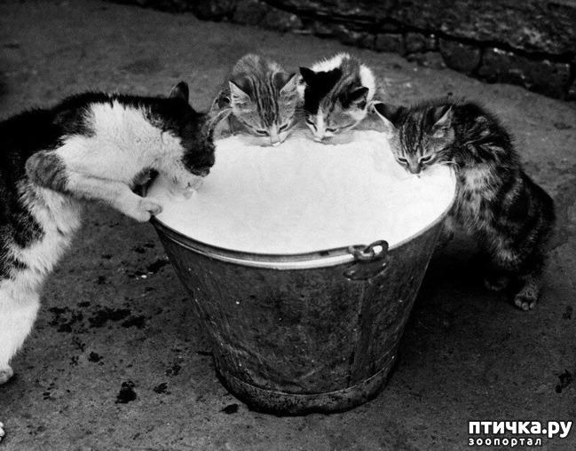 фото 4: Жизнь кошек во времена Советского Союза. Давайте вспоминать.