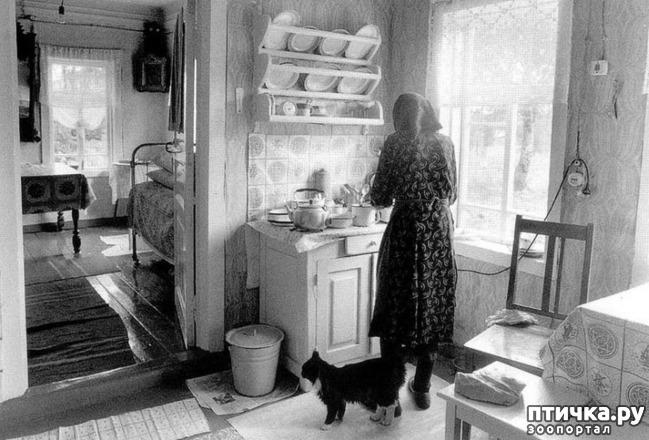 фото 5: Жизнь кошек во времена Советского Союза. Давайте вспоминать.