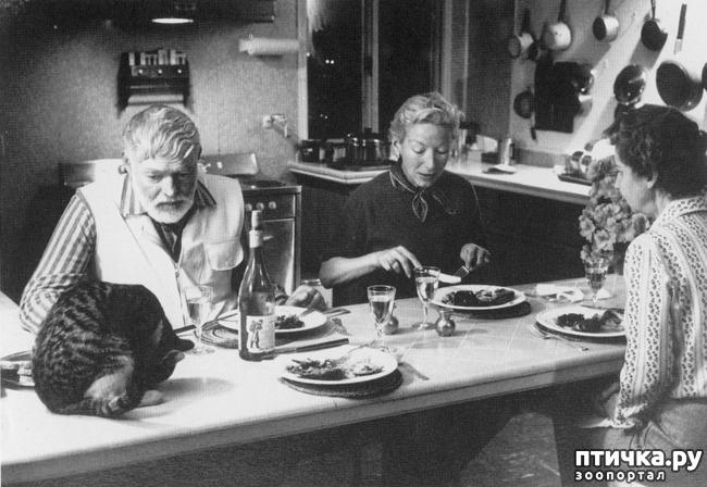 фото 6: Жизнь кошек во времена Советского Союза. Давайте вспоминать.