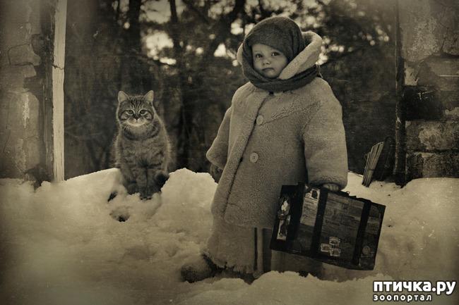 фото 7: Жизнь кошек во времена Советского Союза. Давайте вспоминать.