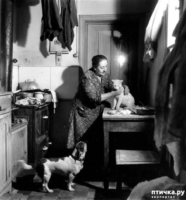 фото 8: Жизнь кошек во времена Советского Союза. Давайте вспоминать.