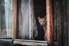 фото 9: Жизнь кошек во времена Советского Союза. Давайте вспоминать.