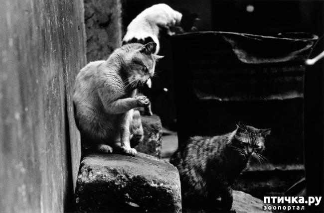 фото 10: Жизнь кошек во времена Советского Союза. Давайте вспоминать.