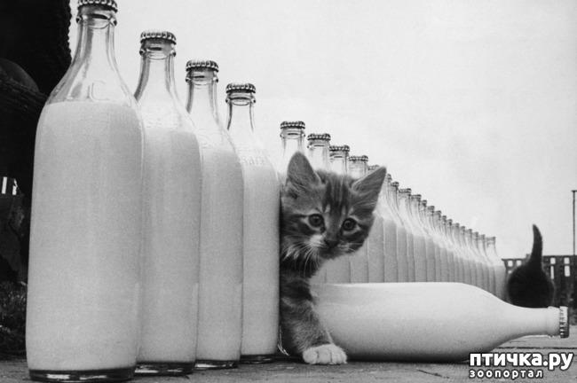 фото 11: Жизнь кошек во времена Советского Союза. Давайте вспоминать.