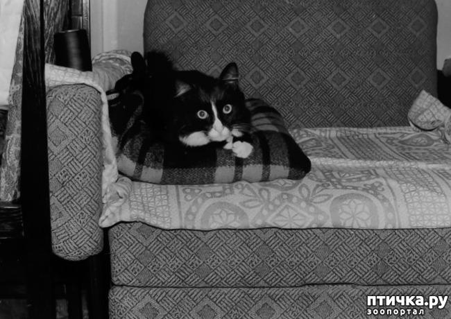 фото 12: Жизнь кошек во времена Советского Союза. Давайте вспоминать.