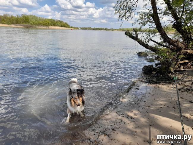 фото 7: Как мы отдыхали на природе