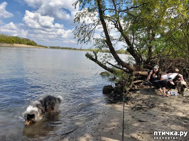 фото 8: Как мы отдыхали на природе
