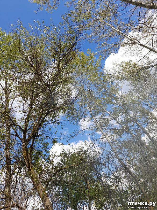 фото 13: Как мы отдыхали на природе