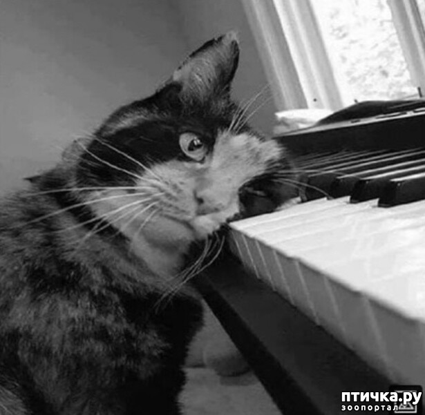фото 13: Жизнь кошек во времена Советского Союза. Давайте вспоминать.