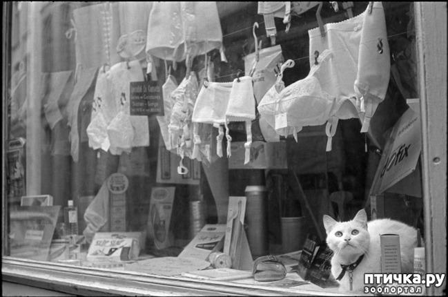 фото 14: Жизнь кошек во времена Советского Союза. Давайте вспоминать.