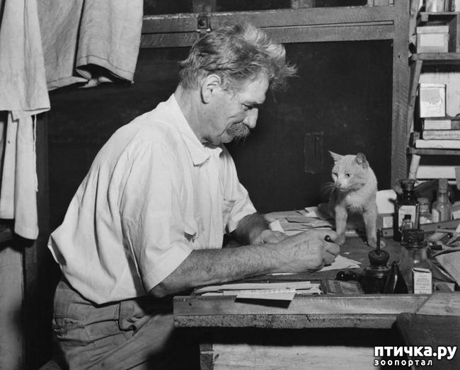 фото 16: Жизнь кошек во времена Советского Союза. Давайте вспоминать.