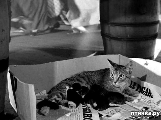 фото 17: Жизнь кошек во времена Советского Союза. Давайте вспоминать.