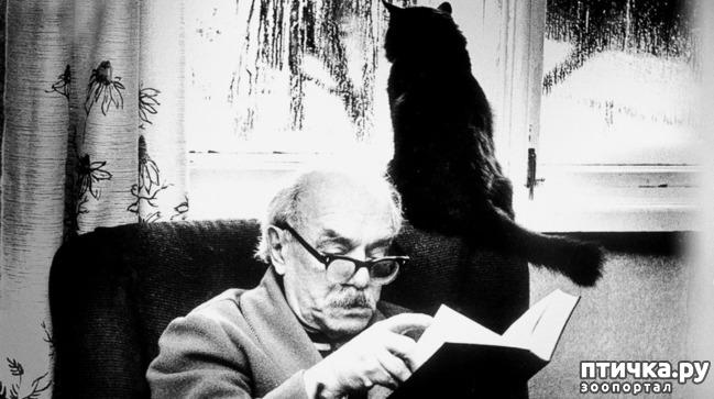 фото 18: Жизнь кошек во времена Советского Союза. Давайте вспоминать.